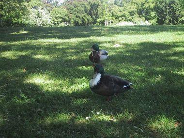 060611_park_bird